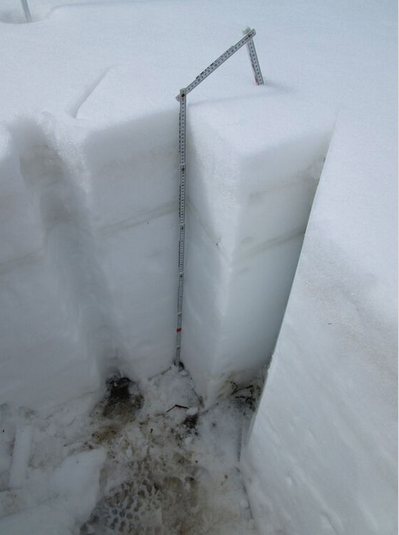 """Snow profile #23, on June 1, 2015, at Swamp Angel Study Plot. The merged dust layers D3/D2/D1 are seen as a very faint band some 4"""" below the surface. Rain-on-snow during May leached that merged dust into underlying snow, reducing its visual intensity. The thick, darker bands several inches below are clear ice. This snowpack had lost 111 mm (4.37"""") of SWE since Profile #21 on May 19, when it contained our measured season maximum of 597 mm (23.50"""") of SWE."""