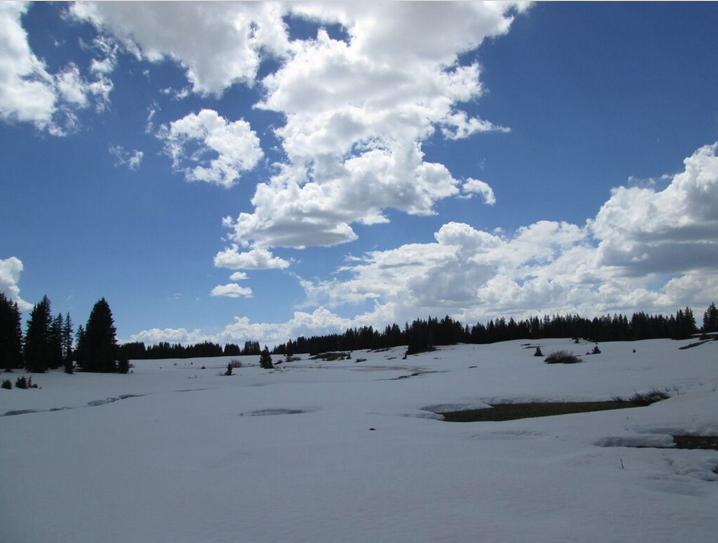 Shallow snowcover on the Grand Mesa, on June 1, was beginning to reveal large openings over wetlands and stream channels. Pools of slush and open water were observed over mostly snow covered reservoirs.