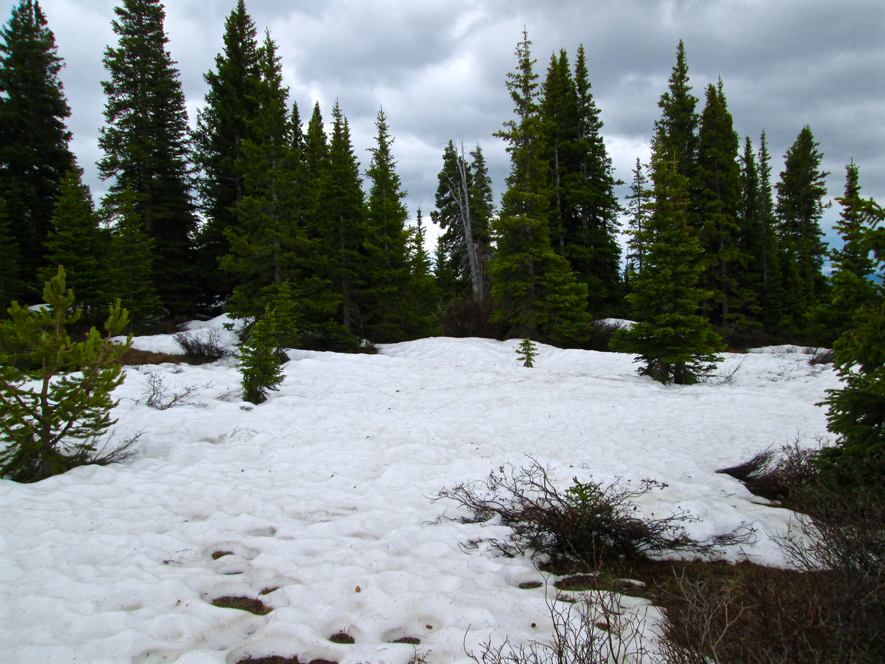 The Hoosier Pass CODOS site on June 16, 2015, near treeline, with rapidly melting and highly variable snowcover.