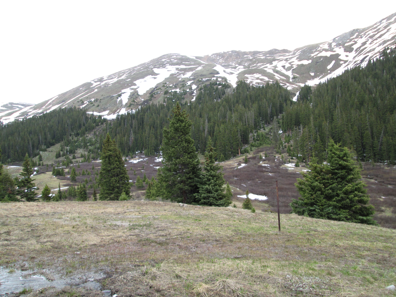 At Loveland Pass, on June 16, 2015 the CODOS Grizzly Peak snow profile site was complete snow-free.