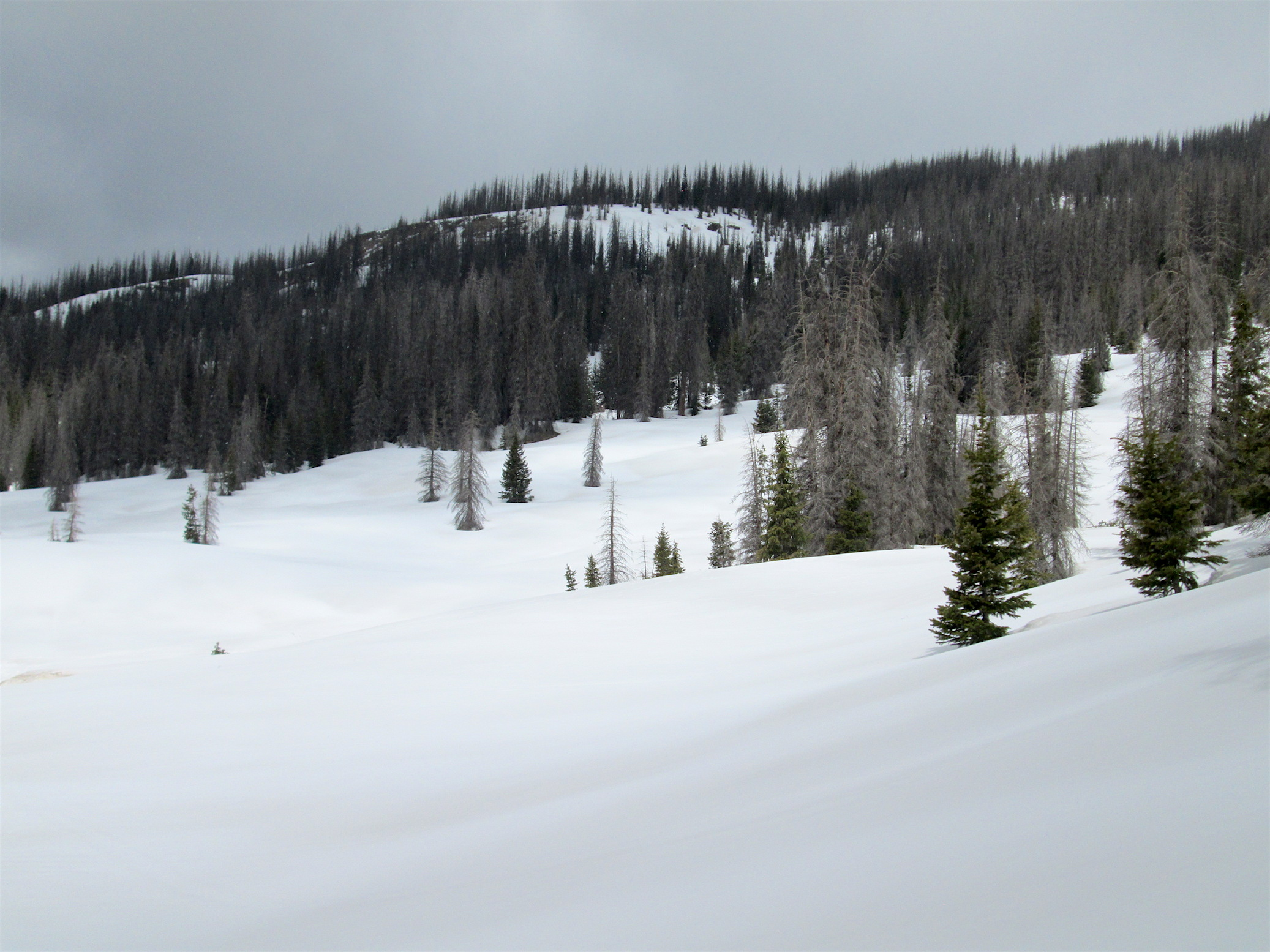 Wolf Creek Pass environs on May 10, 2016.  D5/D6 dust events are visible beneath the scant new snow accumulation.  Following the taking of this photo, sunny warm weather ensued for 4 days, likely causing dust emergence in this locale to occur quickly.  Currently, the forecast over the next five days calls for chance of rain and snow, thereby reducing incoming solar radiation and possibly adding fresh snow on the near-exposed, or exposed dust.
