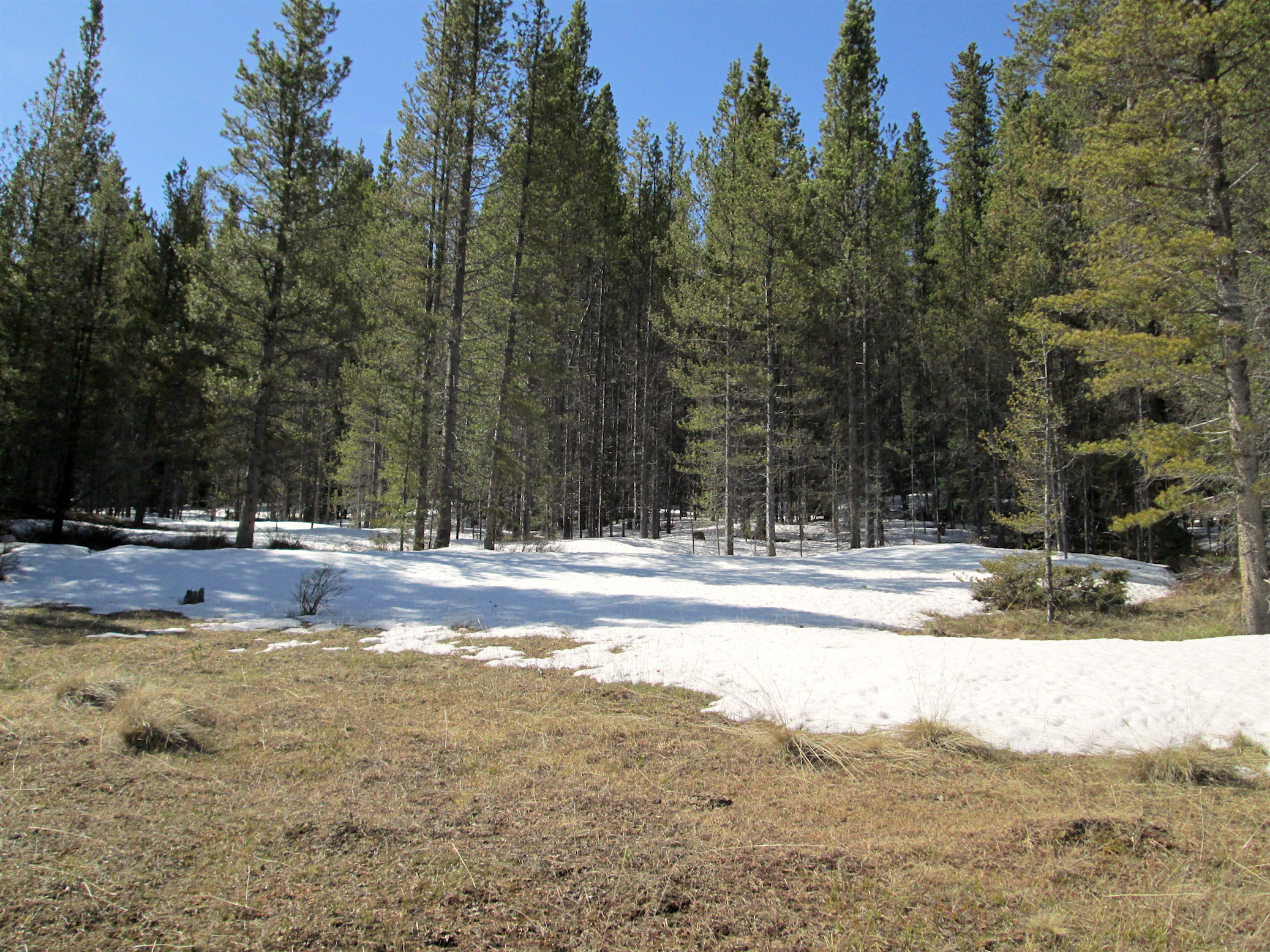 """Park Cone CODOS sample location on May 13, 2016. Very little snow was present, except in forested, shaded areas. An """"all layers merged"""" dust sample was collected at this location."""