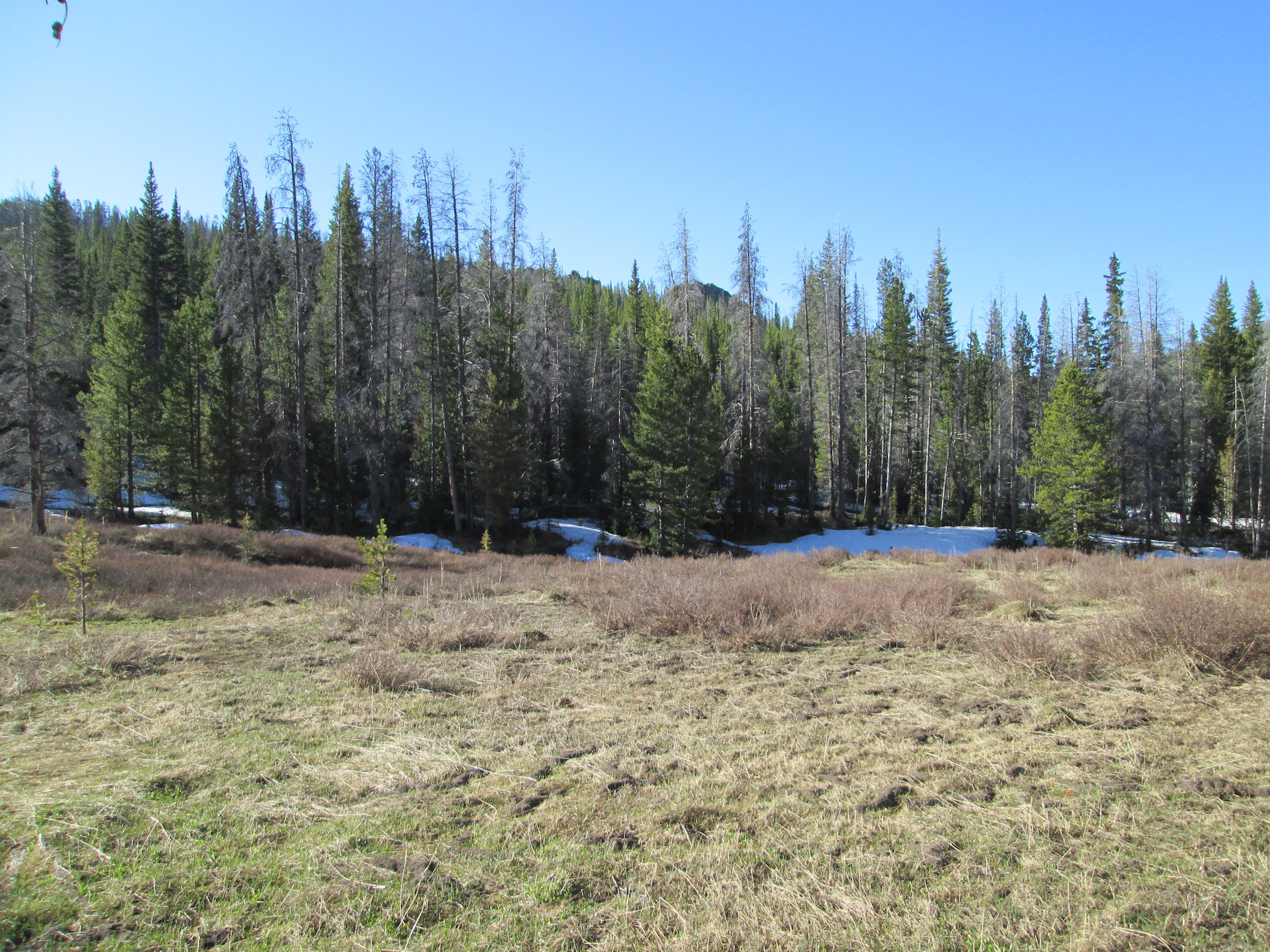 Willow Creek Pass CODOS sample area. Besides north facing, heavily treed areas, snowcover has mostly retreated to higher elevations.