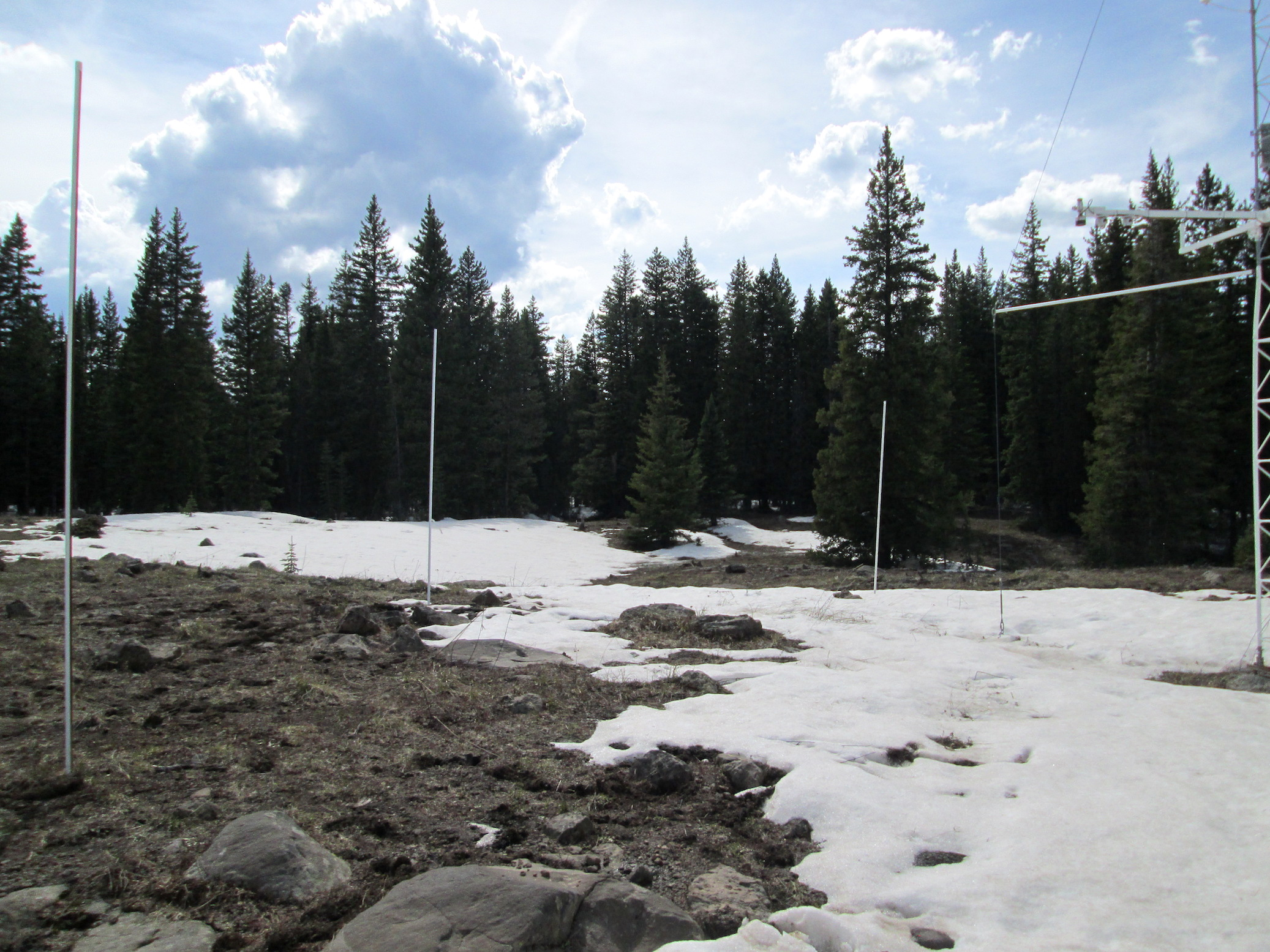 Grand Mesa Study Plot on June 7 with climate station on right side of picture.  A few inches of snow is still present under SR50a snow-depth sensor seen on upper right corner of picture.