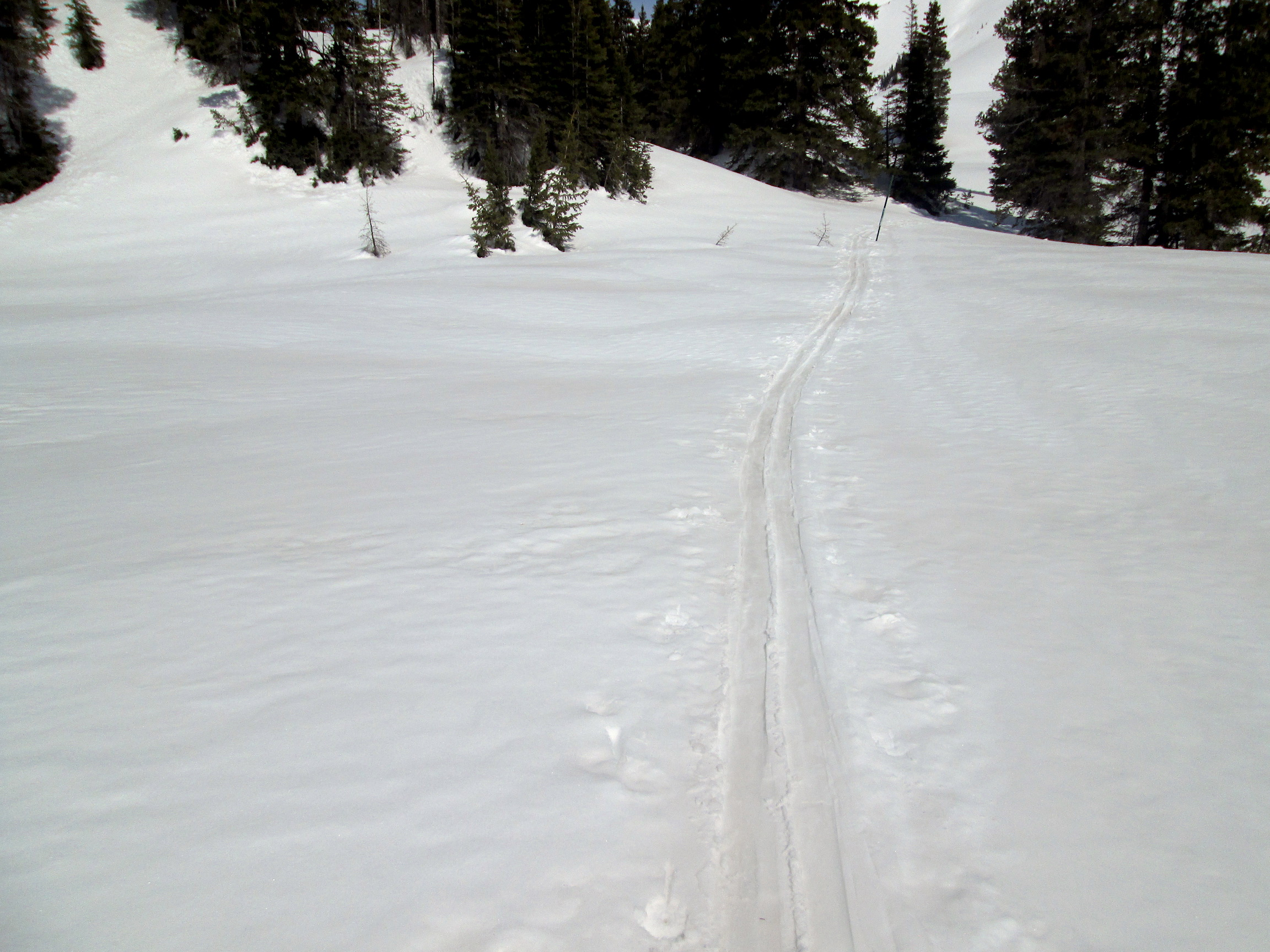 """The April 9 D4 event near Swamp Angel Study Plot. D4 was a """"dry"""" event, occurring without precipitation.  Notice pink dust in ski track and covering landscape."""