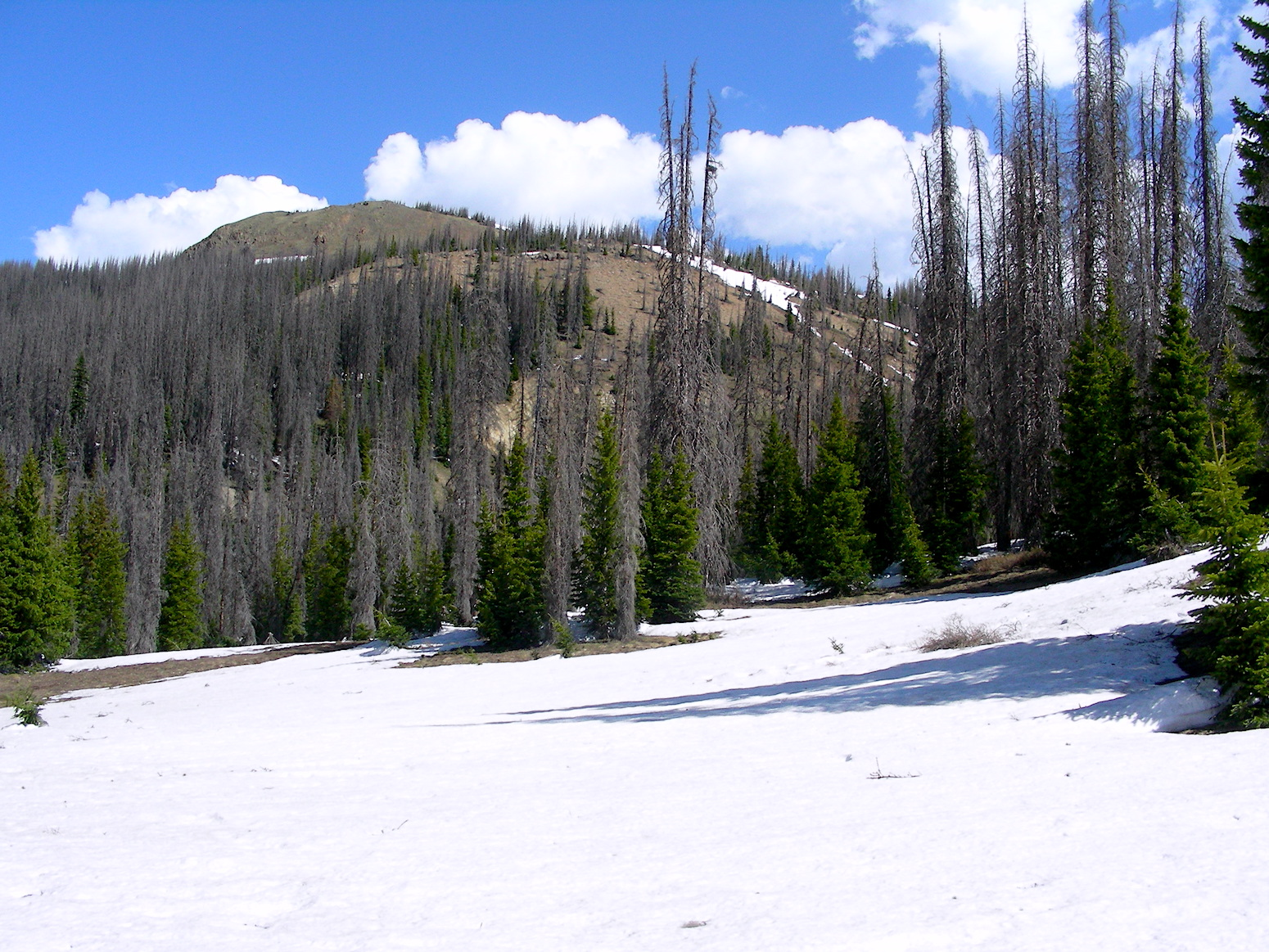 Wolf Creek Pass. Only the higher elevations still have snow.