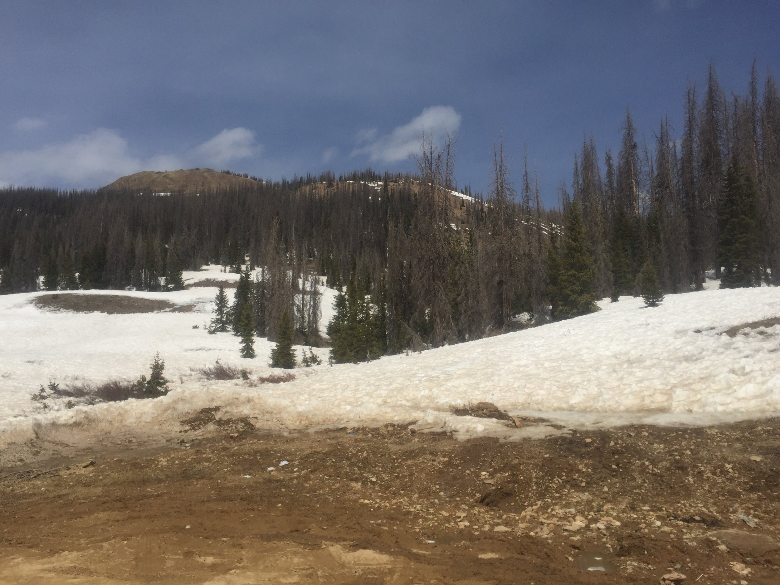 The landscape is starting to show bare ground at Wolf Creek Pass.