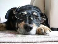 Image of Mortgage Dog
