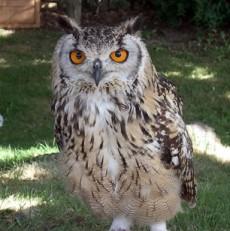 s_owl2.jpg