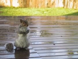 s_squirrel.jpg