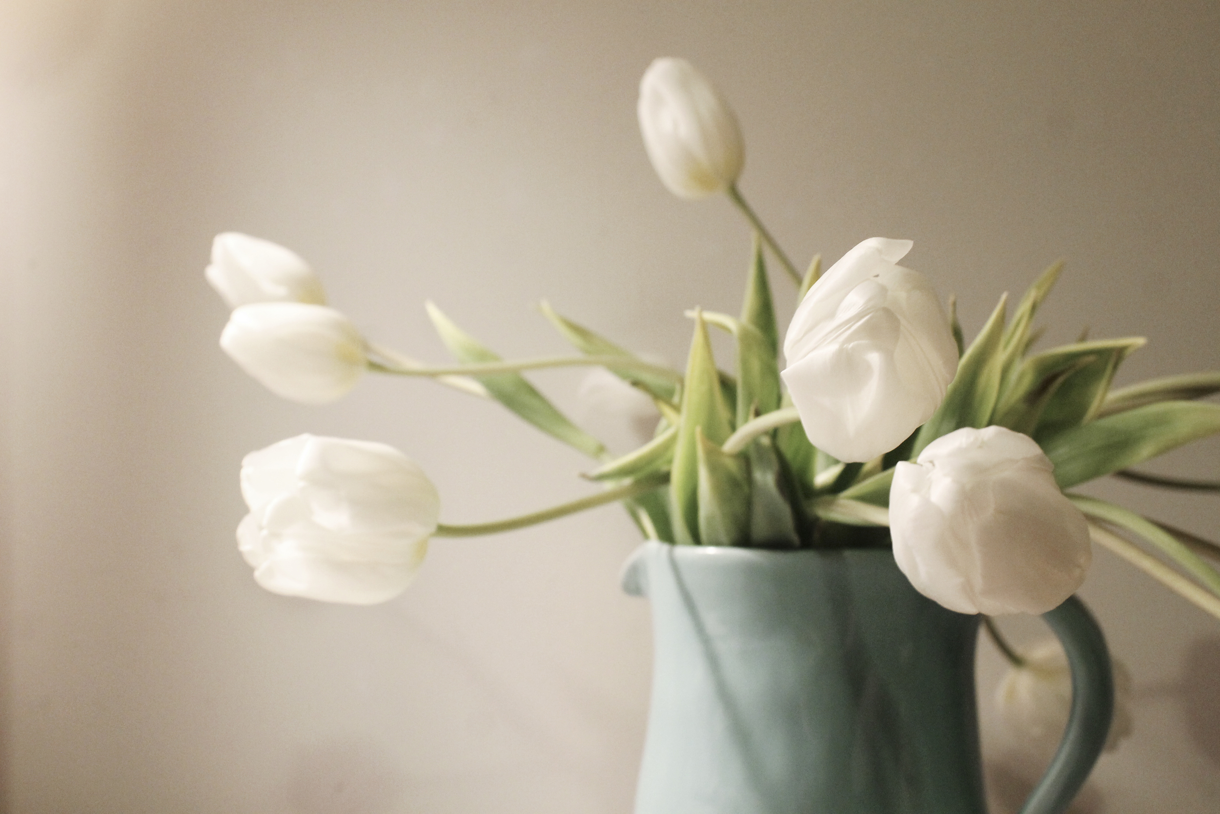 white tulips in a pitcher