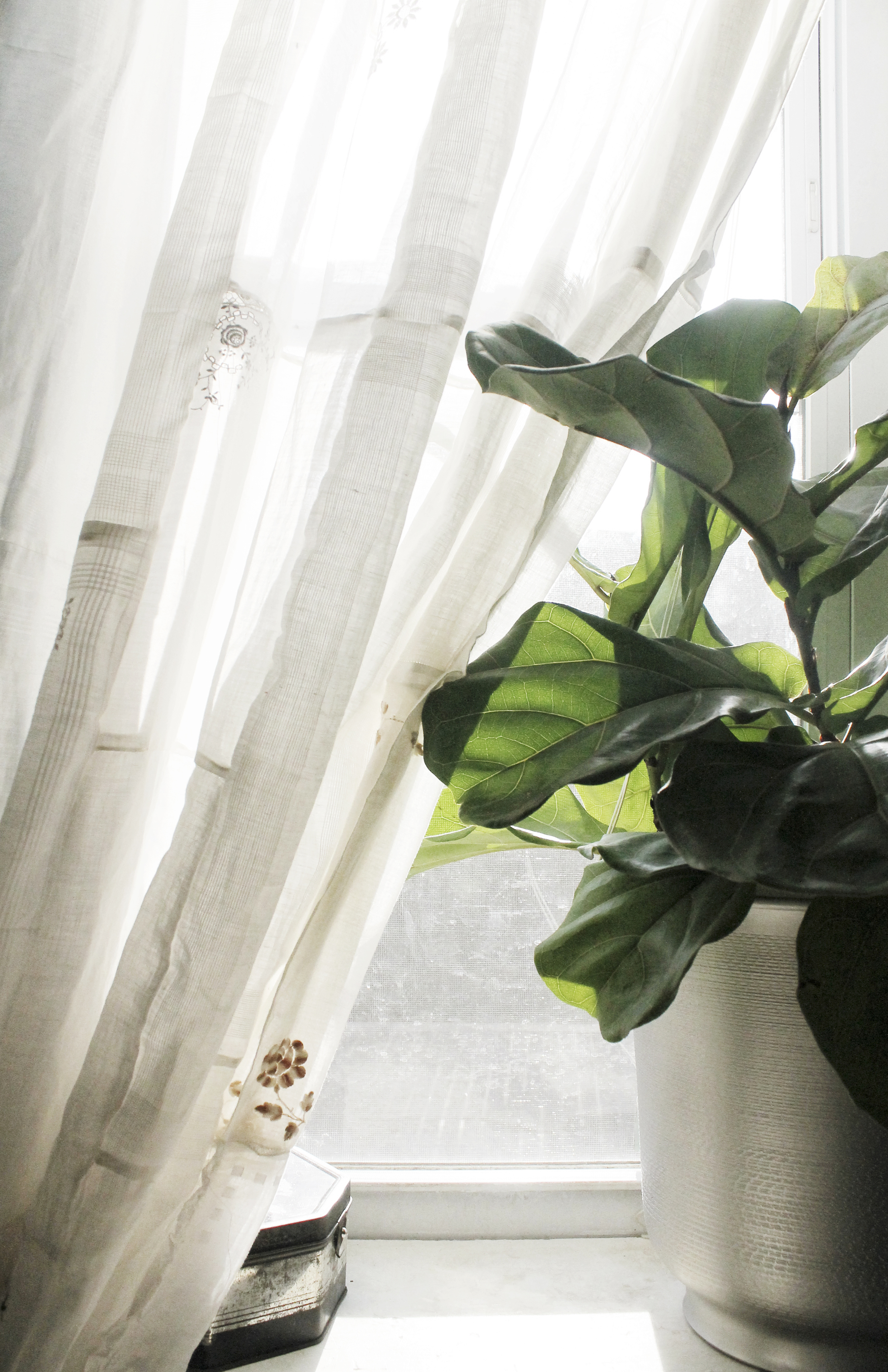 houseplants on windowsills