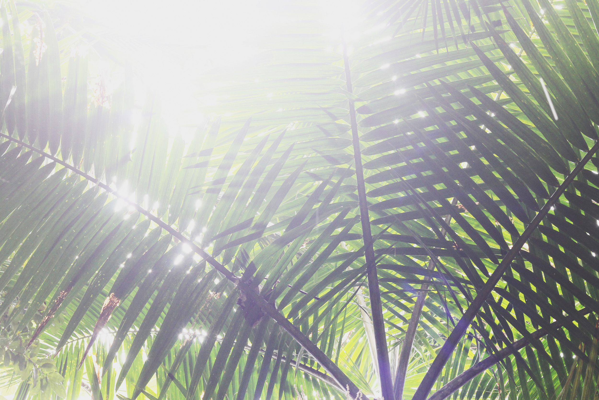 el yunque rainforest, puerto rico | via: bekuh b.