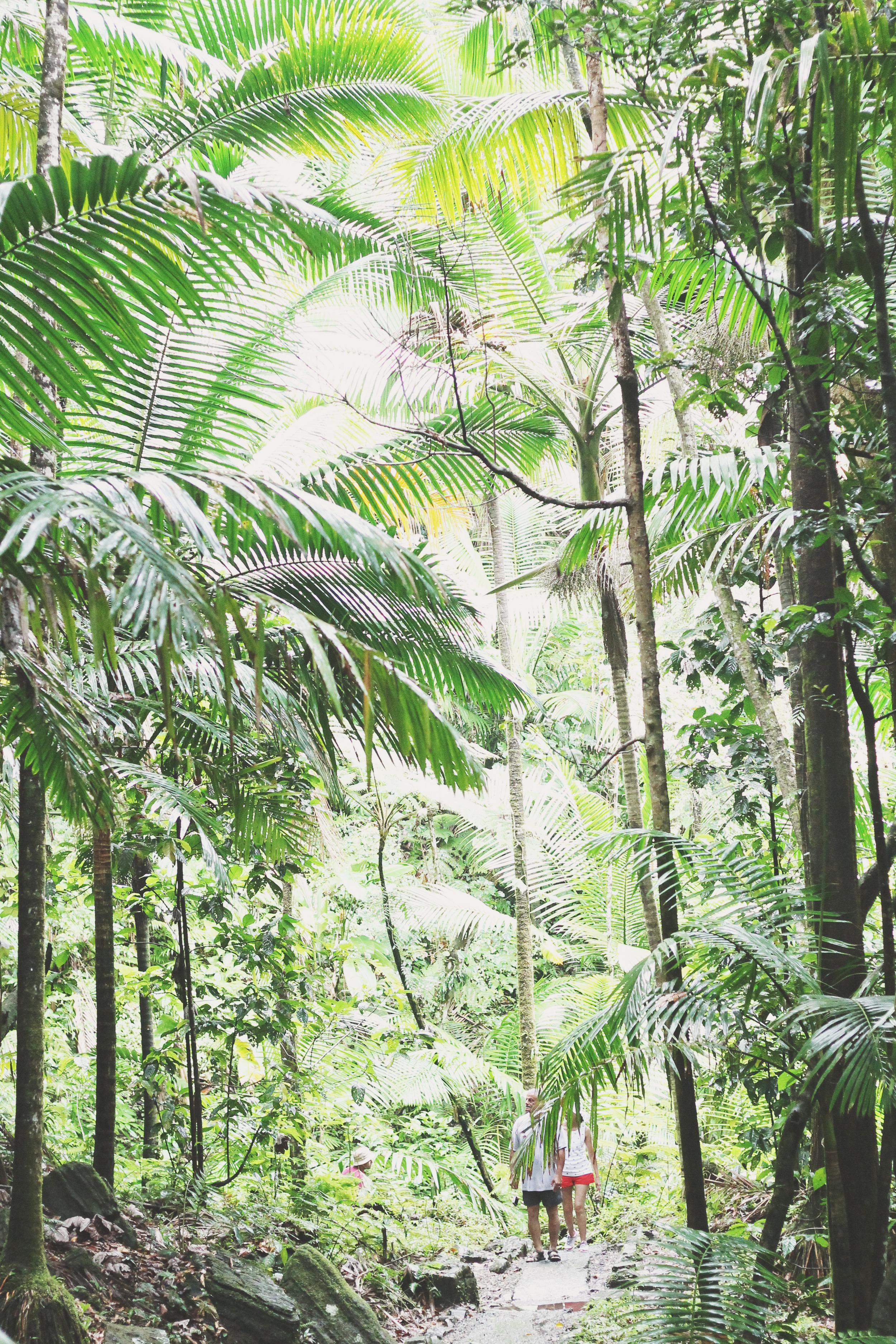 el yunque rainforest puerto rico | via: bekuh b.