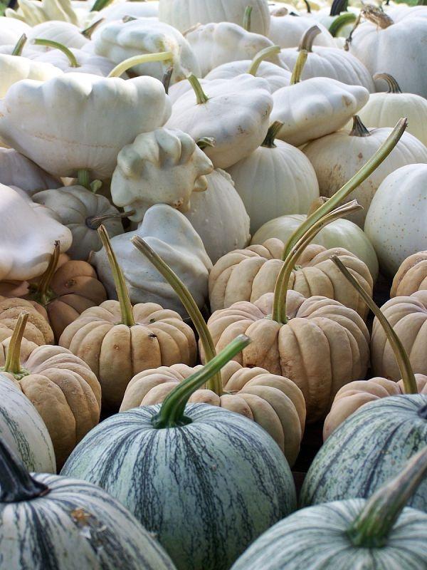 heirloom pumpkin squash | via: bekuh b.