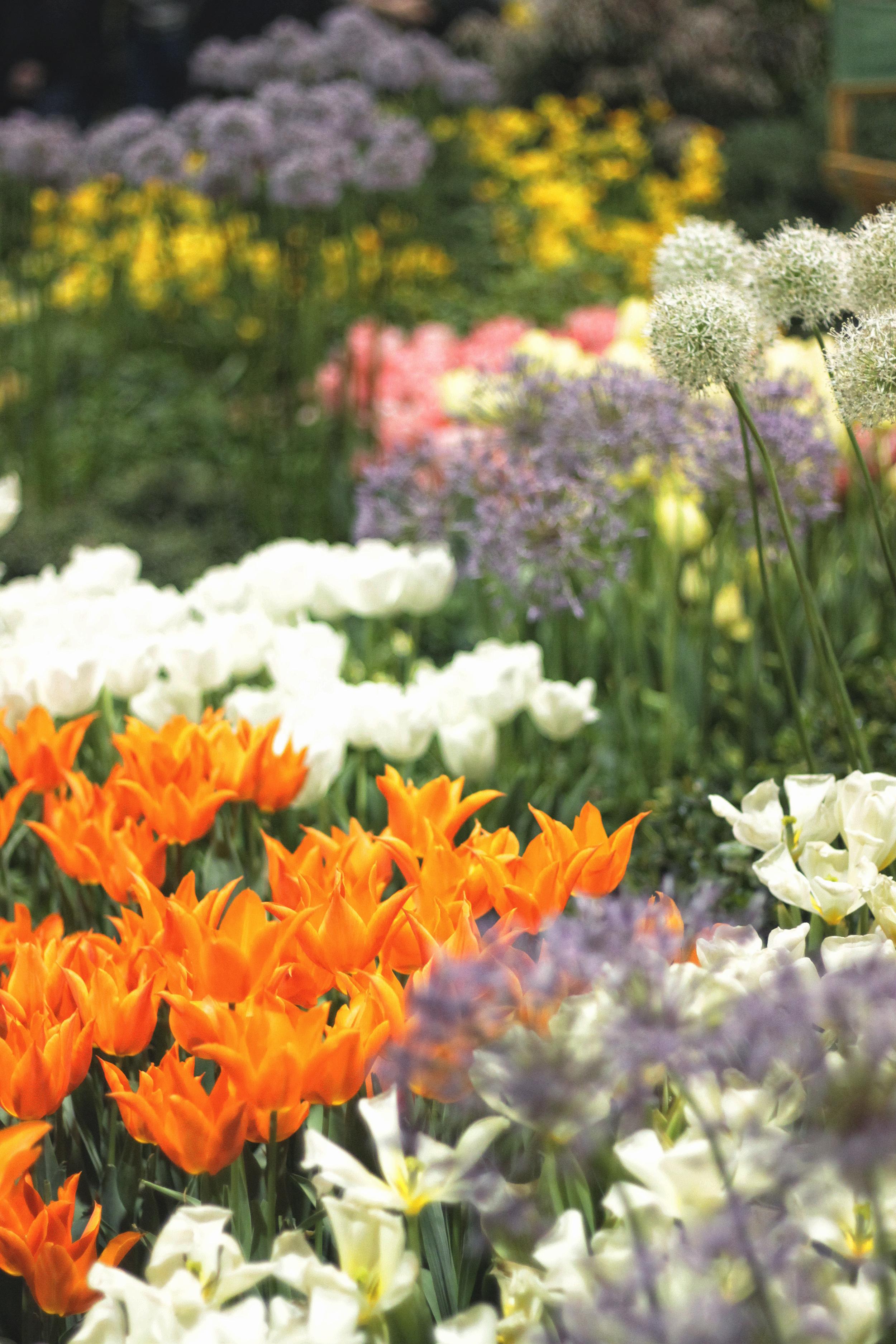mary poppins themed garden | via bekuh b.