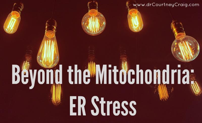 ER stress