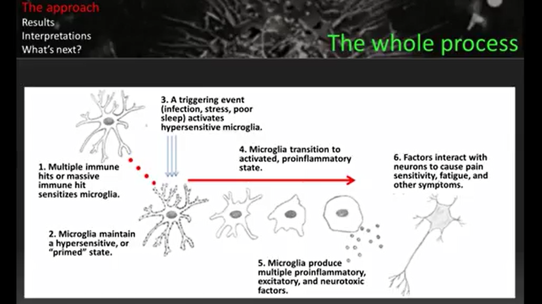 HOW MICROGLIA PROMOTE NEUROINFLAMMATION (SCREENSHOT FROM DR. YOUNGER'S PANDORA WEBINAR)