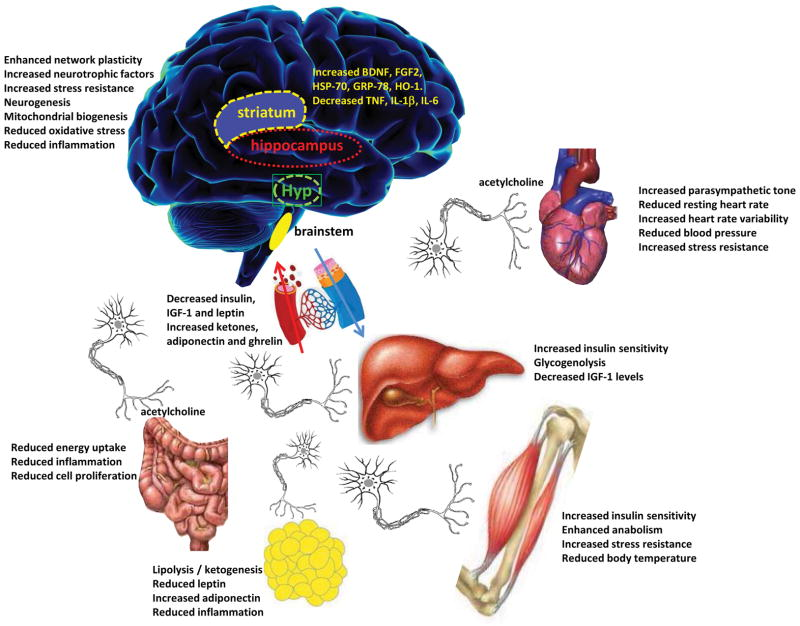 Fasting: Molecular Mechanisms and Clinical Applications Longo & Mattson (2014)
