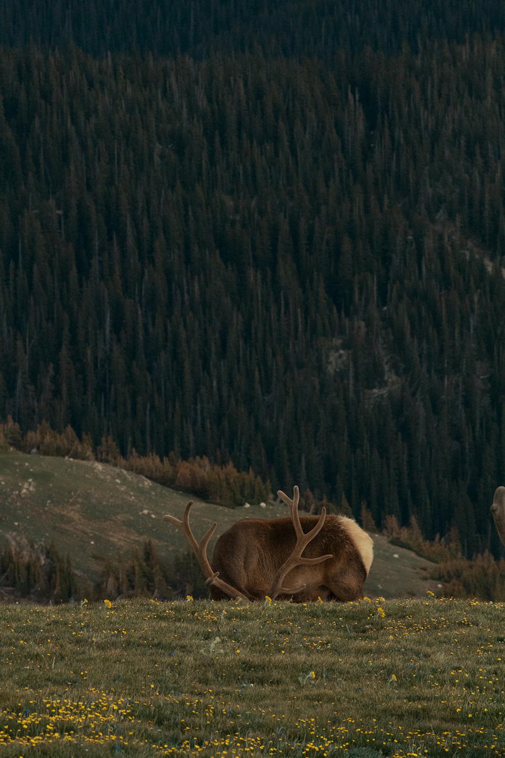 RhodesWeddingCo_Blog_Colorado_38.jpg