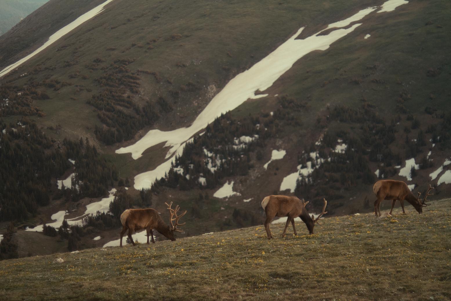 RhodesWeddingCo_Blog_Colorado_48.jpg