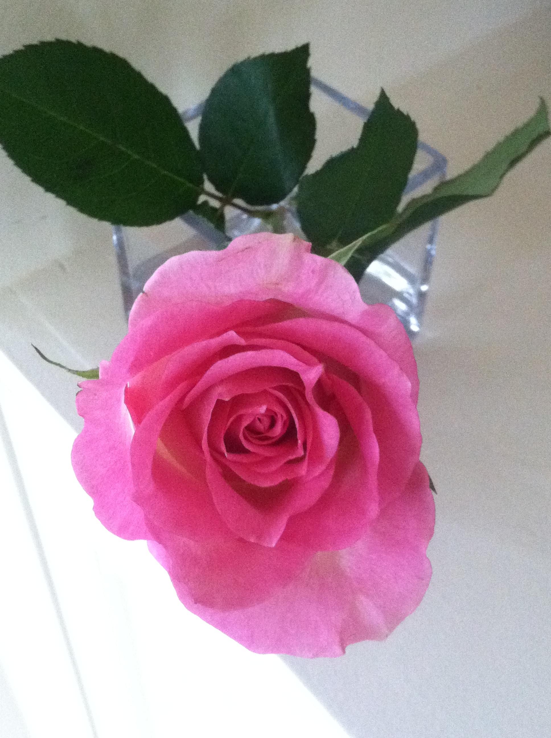 Mother's Day Roses.jpg