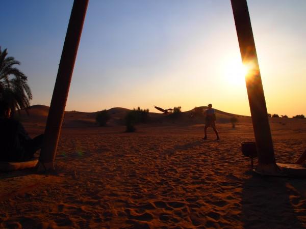 arabian adventures + falcon