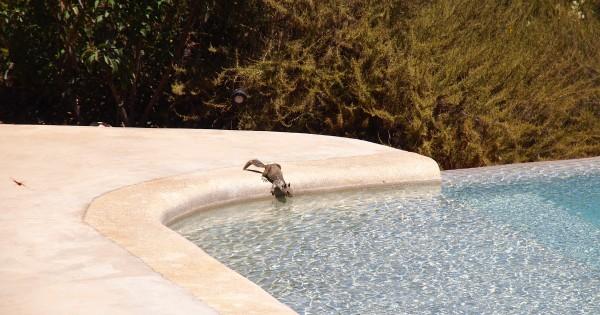 wildlife drinking pool encuentro
