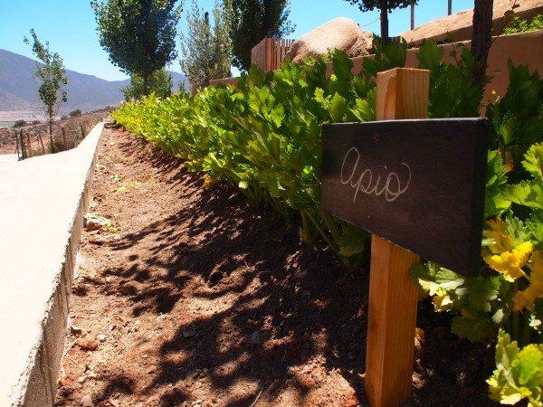 herbs at encuentro guadalupe