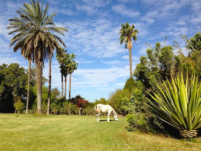 white horse la gazelle d'or