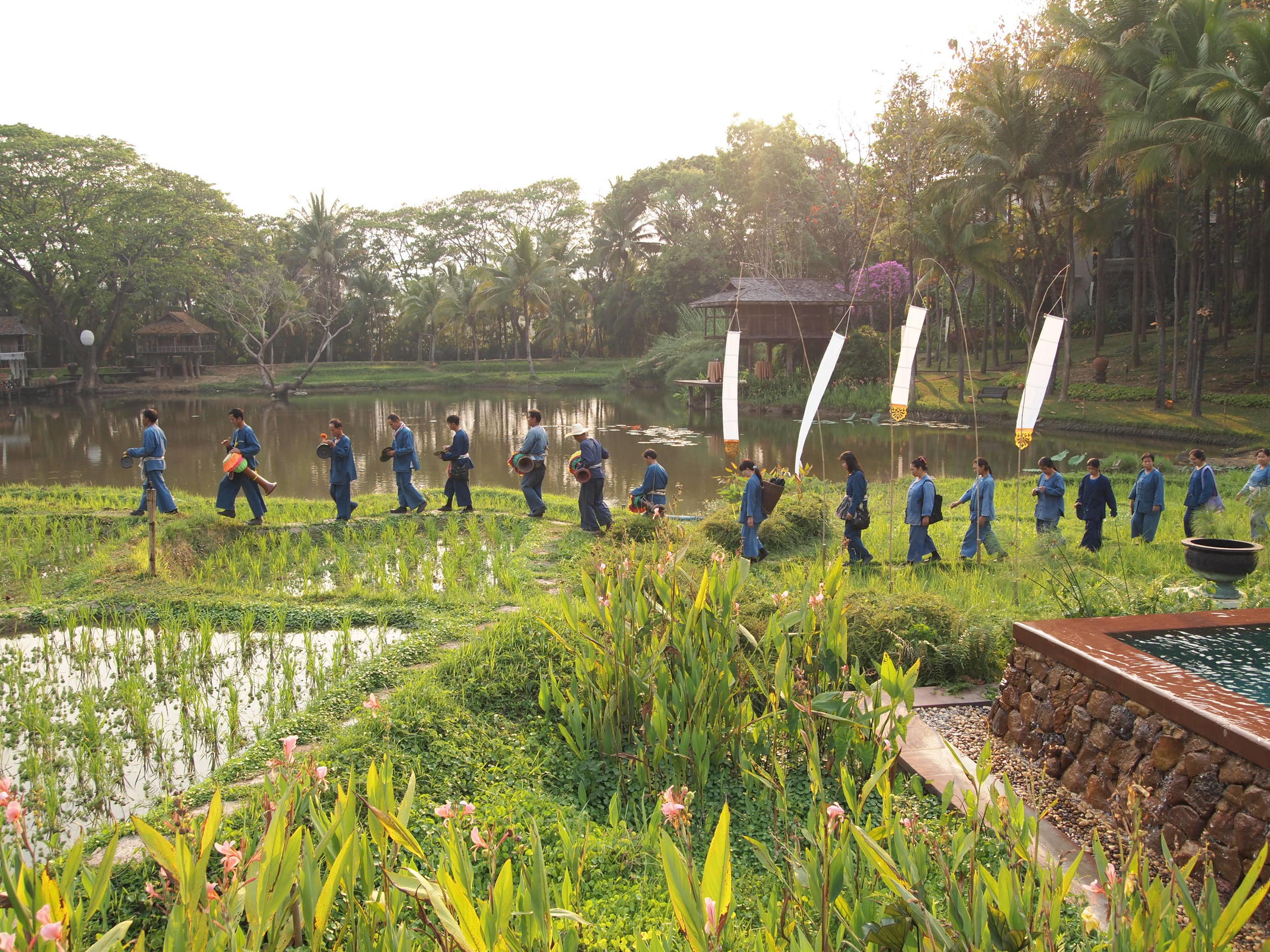 Thailand. Four Seasons Resort Chiang Mai. The rice paddy parade, an end-of-day procession happening every night at 4.50pm to commemorate the end of the work day on the resort's working rice field.