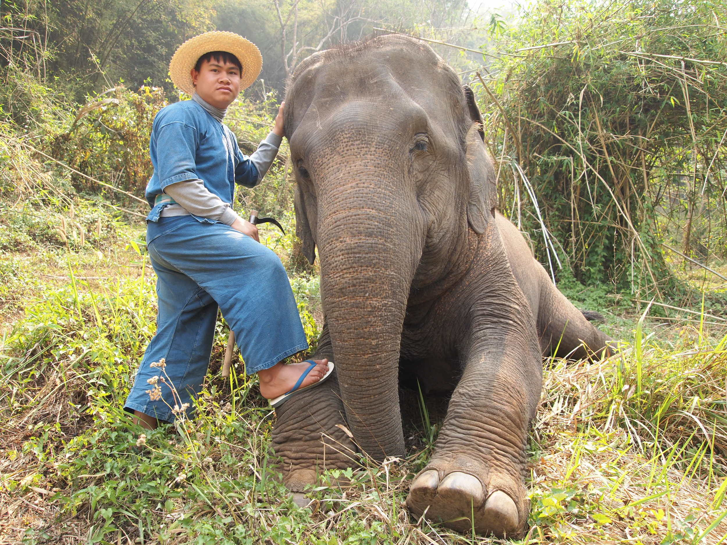 Thailand. My elephant and his mahout {elephant handler} at the Four Seasons Tented Camp Golden Triangle.