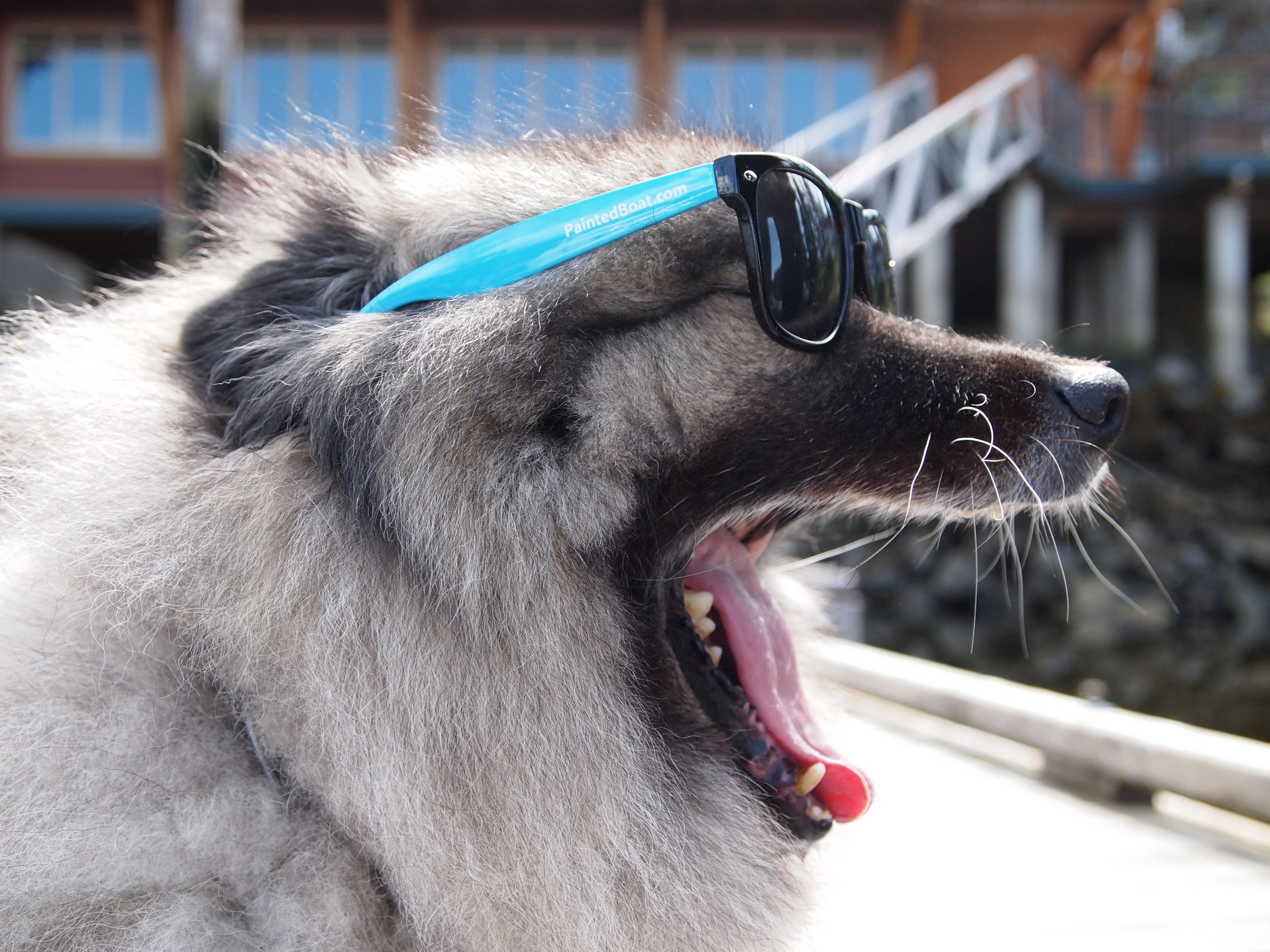 Canada's Sunshine Coast.Dog Styler at Painted Boat Resort.