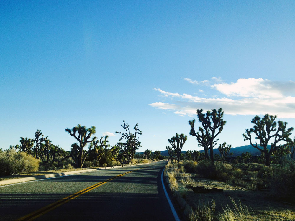 Driving through Joshua Tree National Park