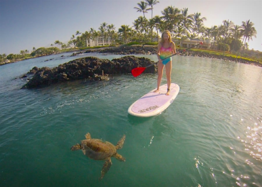 For the nature encounters àla paddleboard