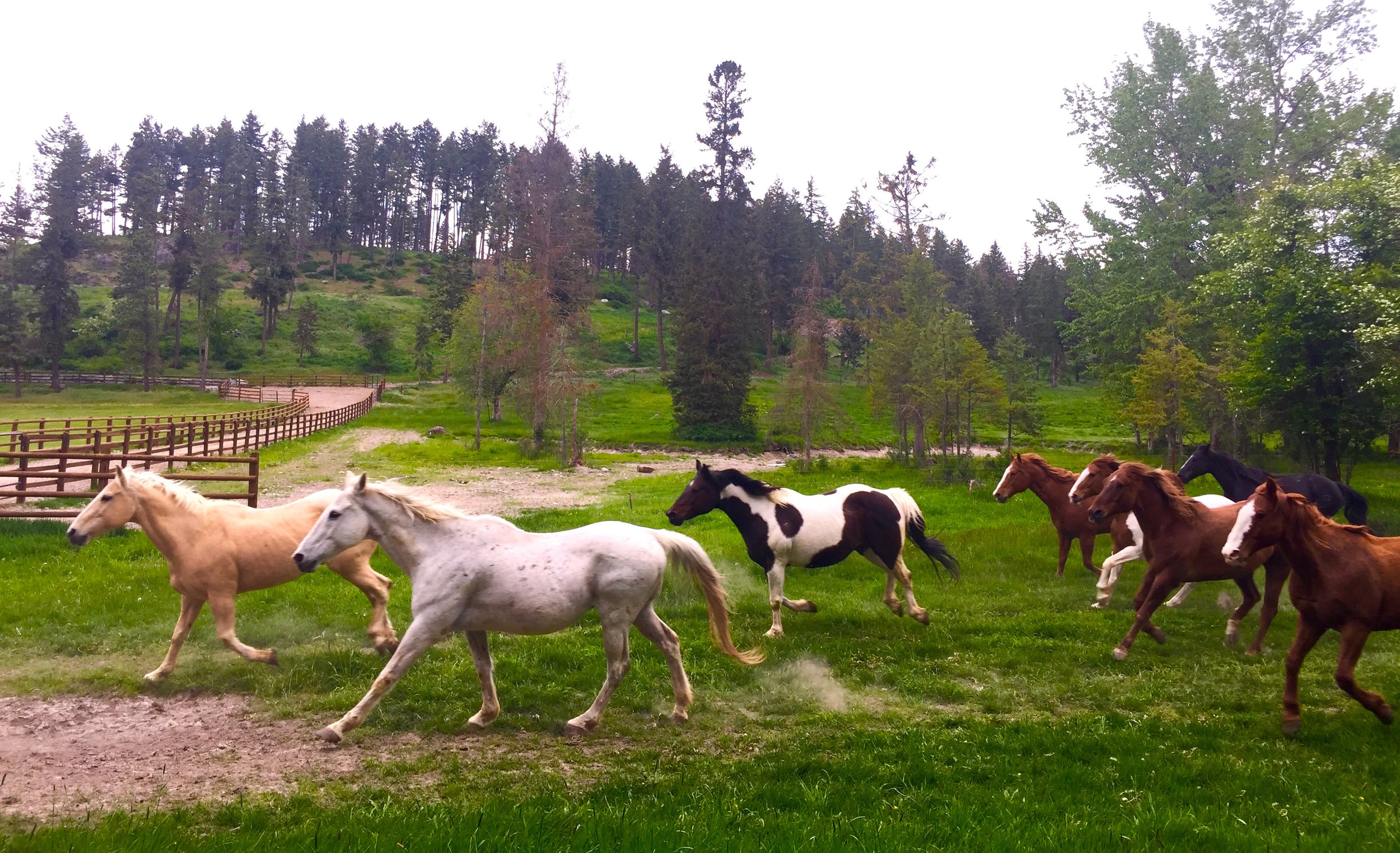 """Stampede! Welcome to Flathead Lake Lodge, a dude ranch and waterfront retreat that's so authentically """"western,""""you wonder if Clint Eastwood will ride by on a horse."""