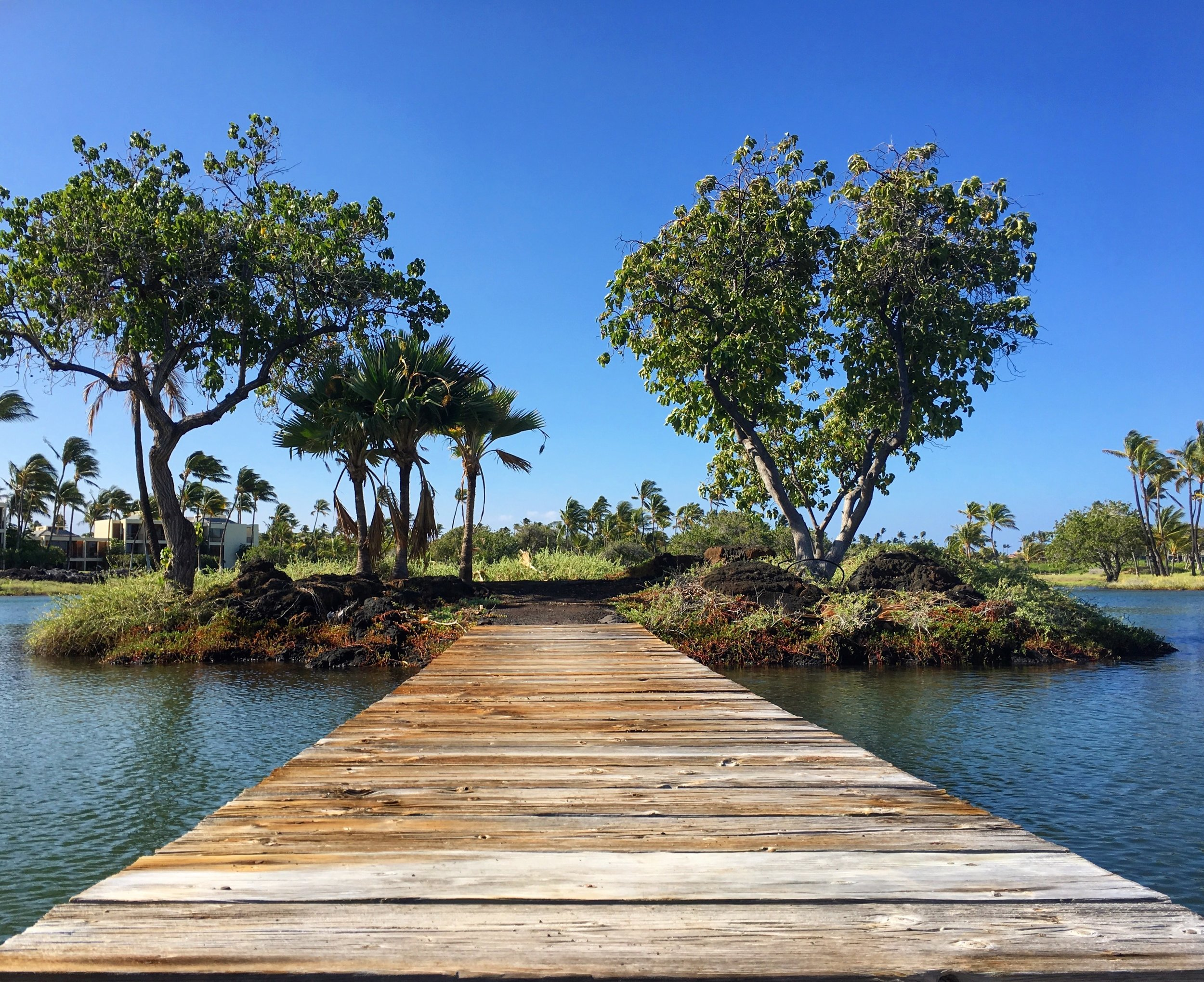 A bridge over one of the seven ancient  Kalahuipua'a Fishponds  used by ancient Hawaiians to raise fish and supplement their ocean fishing efforts.
