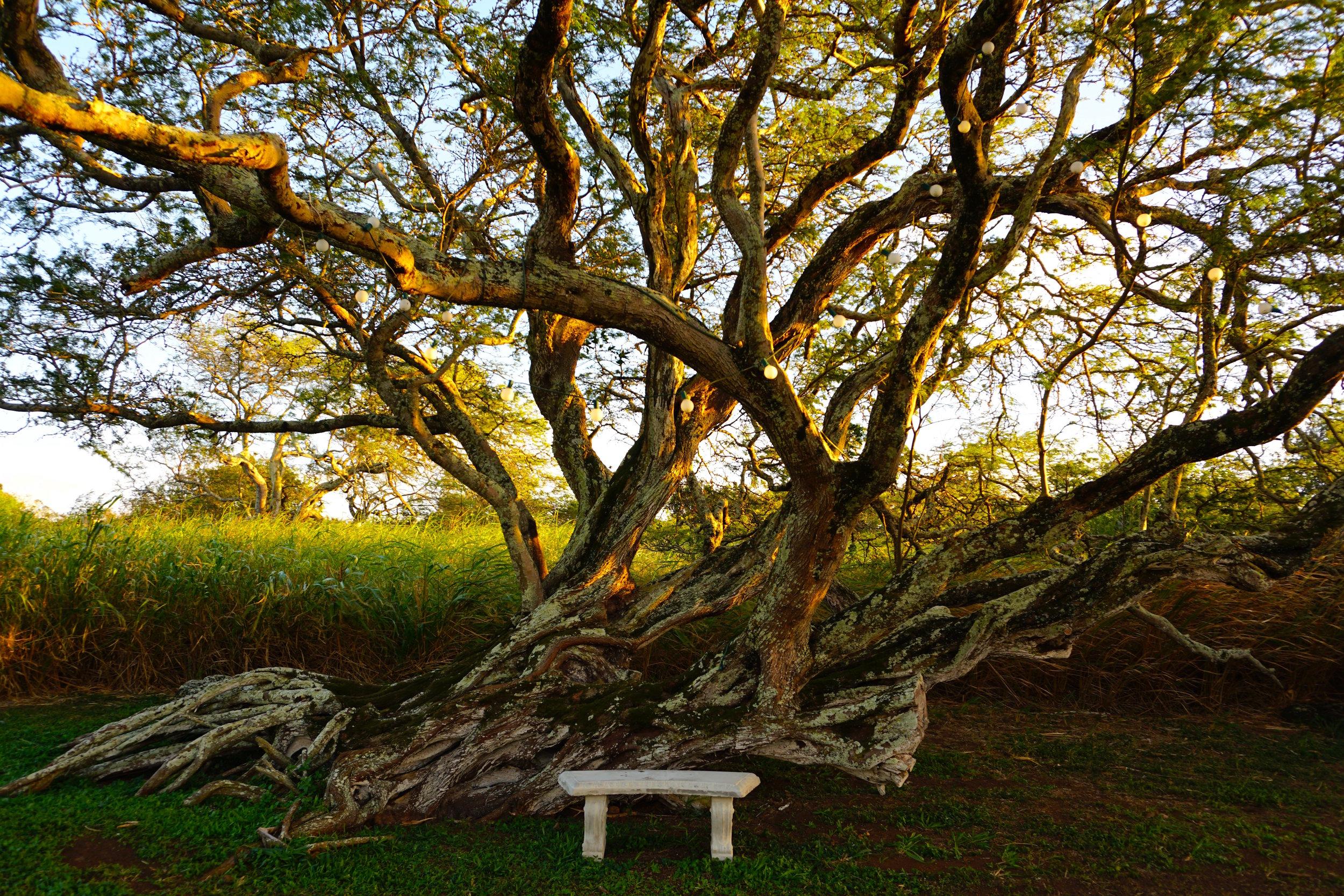 Photoshoot-ready tree