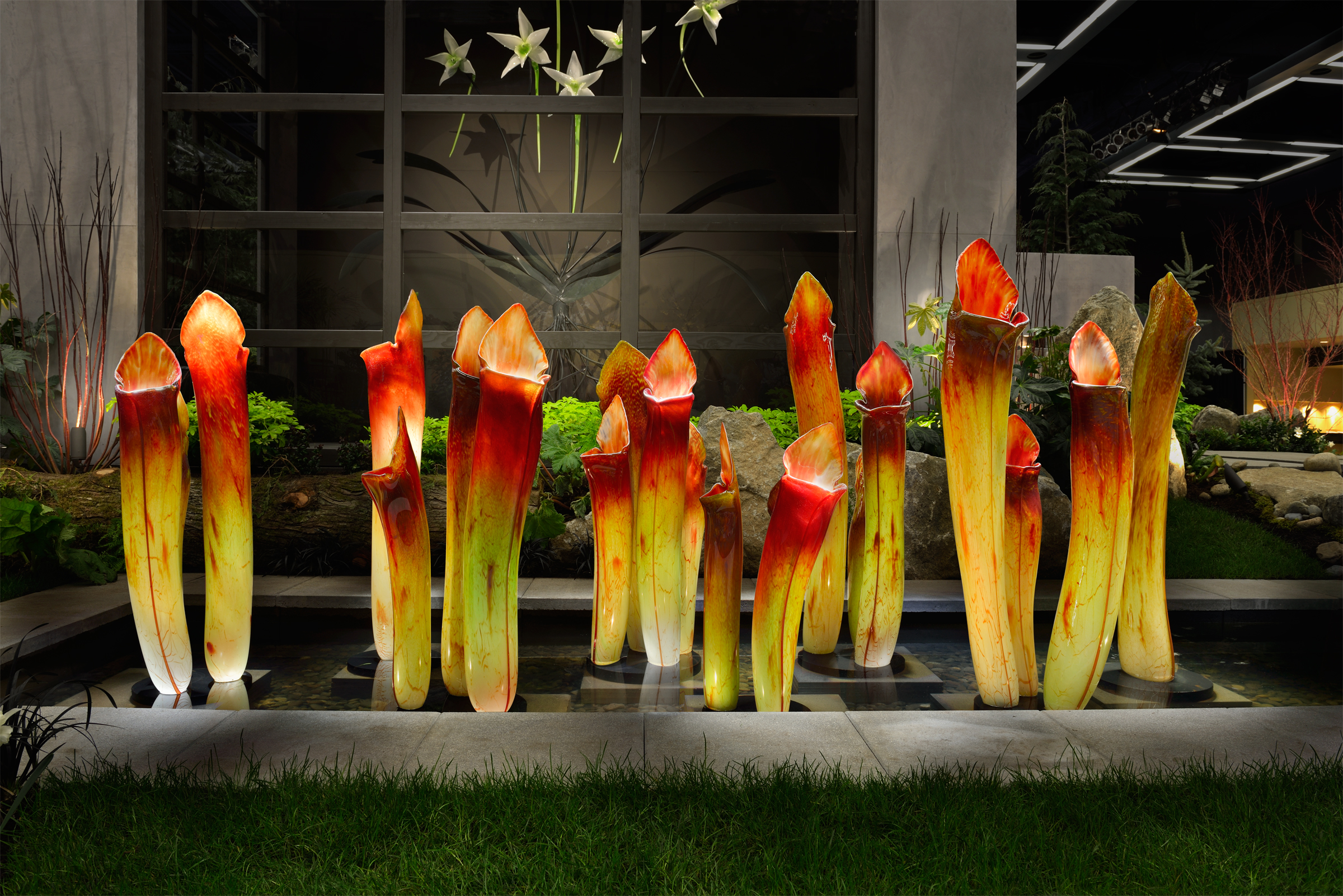 Red--Yellow-Pitcher-Plants-v3.jpg