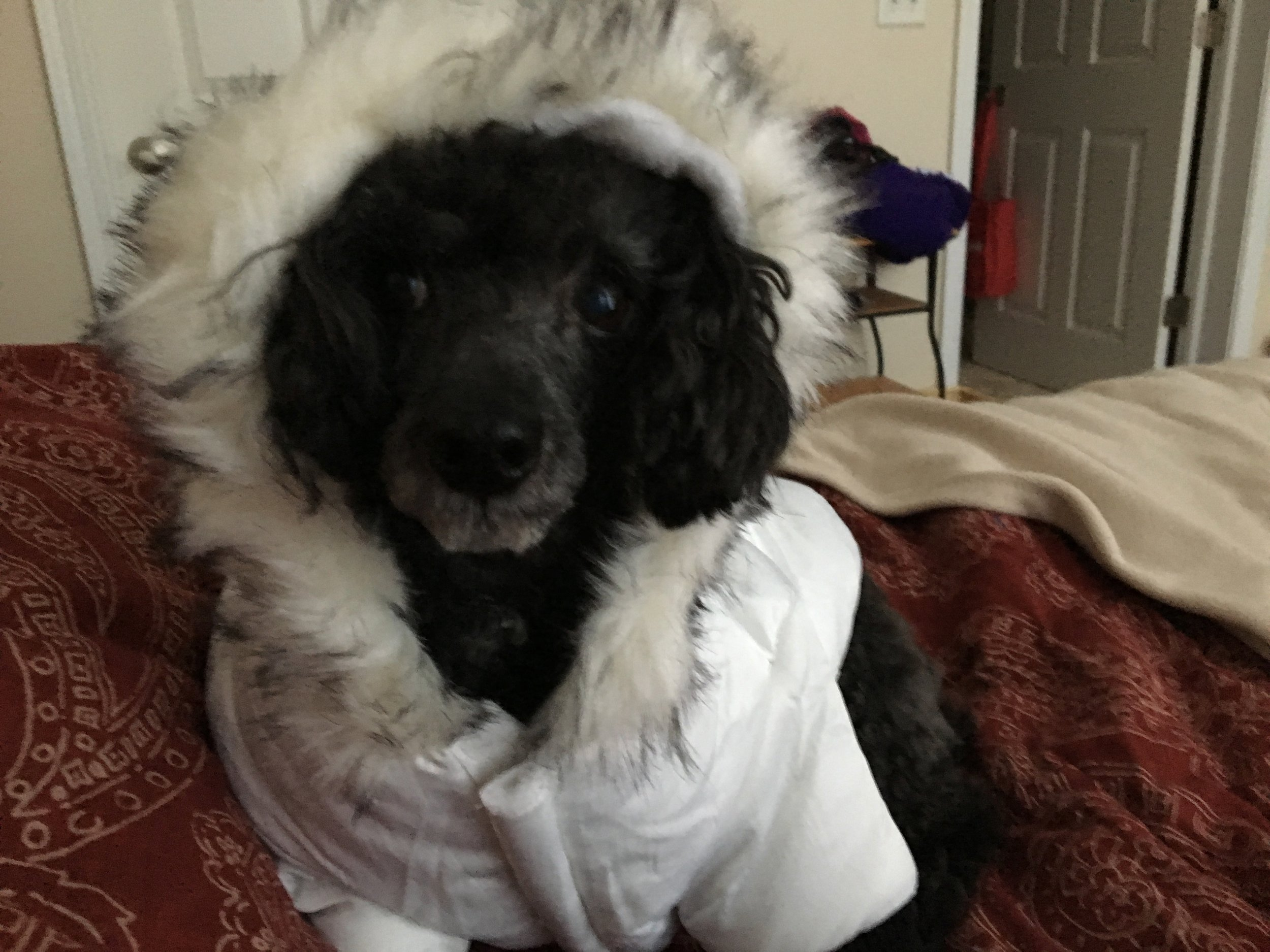 Thank goodness we all have bubble coats. Here's Duncan in his.