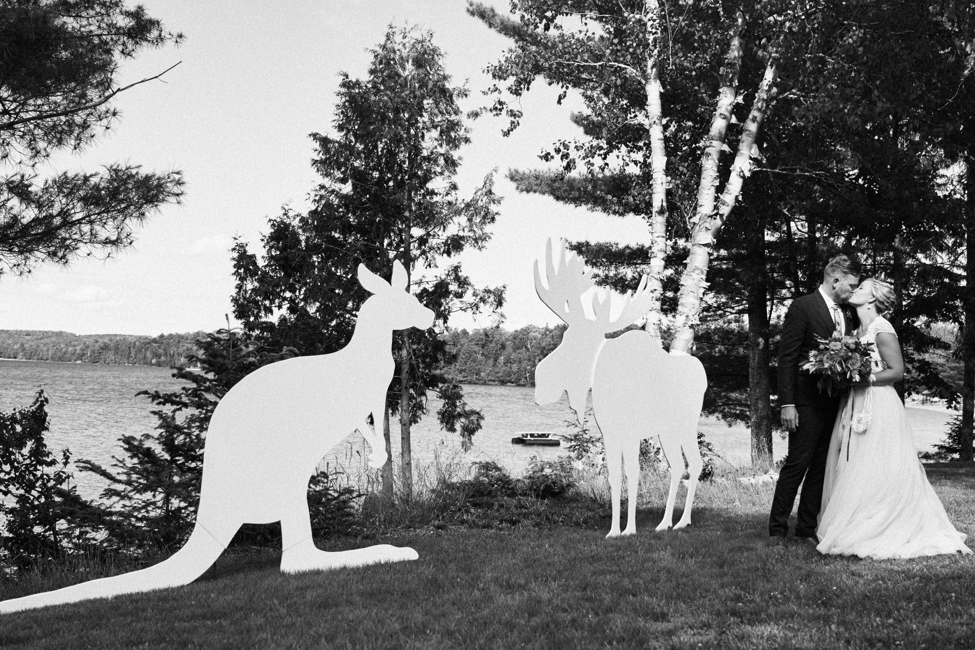 moose and kangaroo