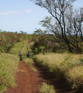 Mountain bike ride trails on Maui.