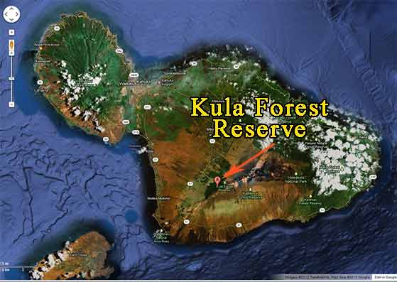 A Map showing the mountain biking in Kula Forest Reserve on Haleakala.