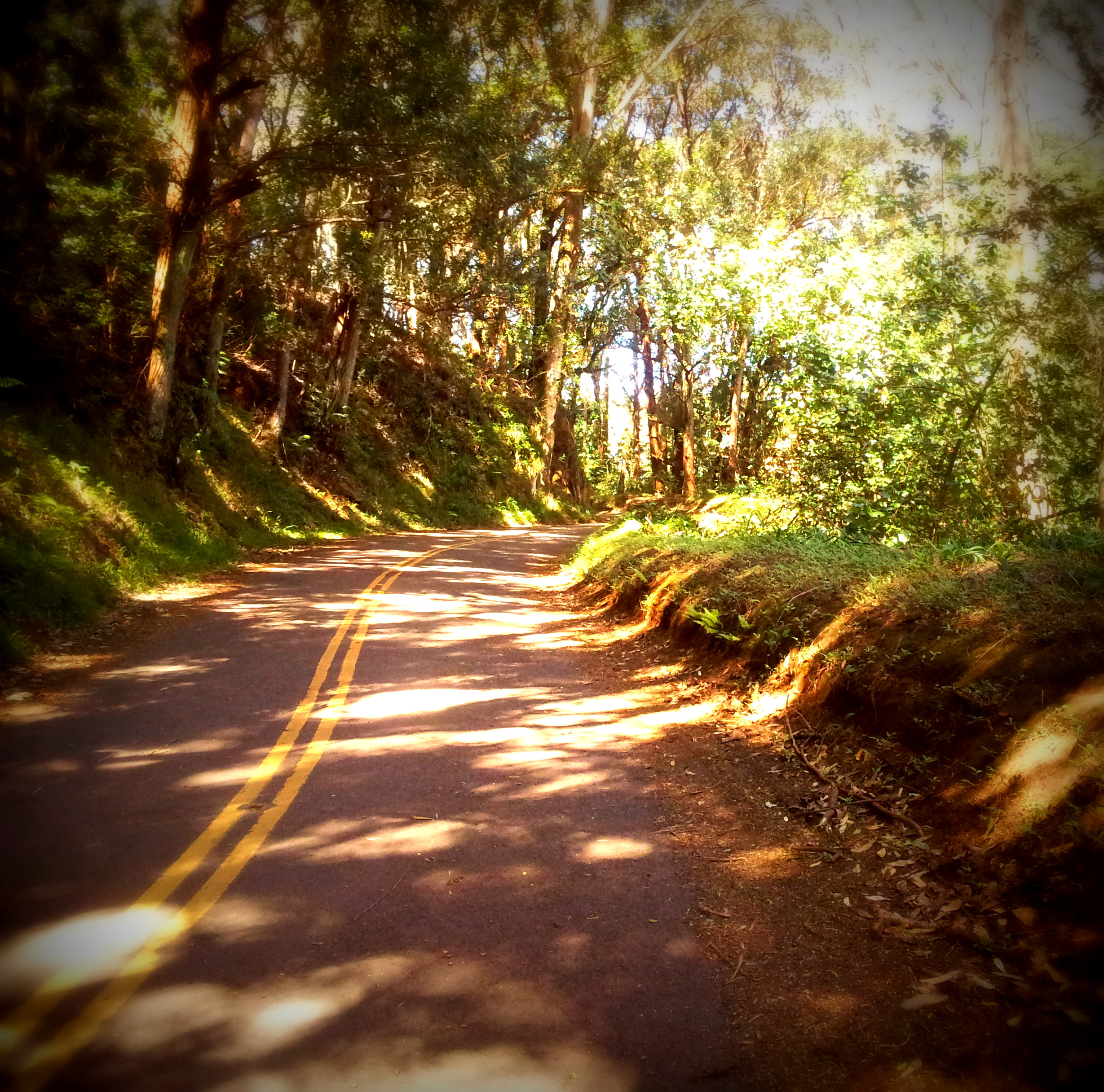 Haiku Rd is a sanctuary of a bypass off of Hana Hwy