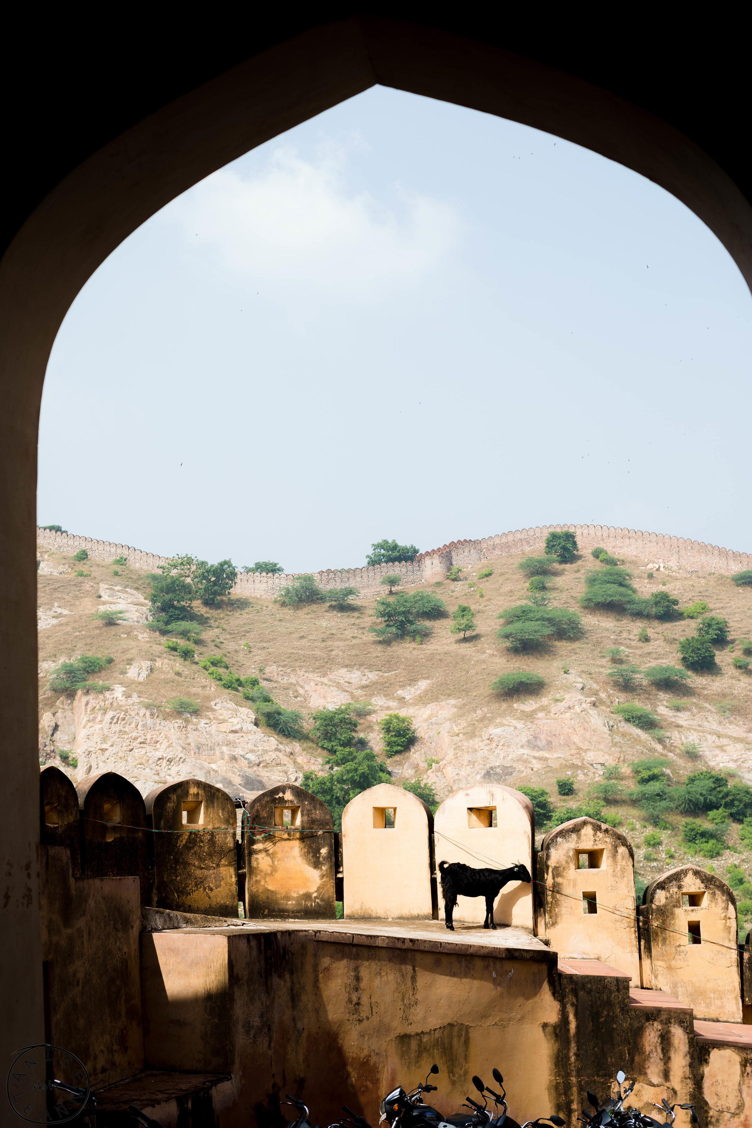 India-Jaipur-Day2-80.jpg