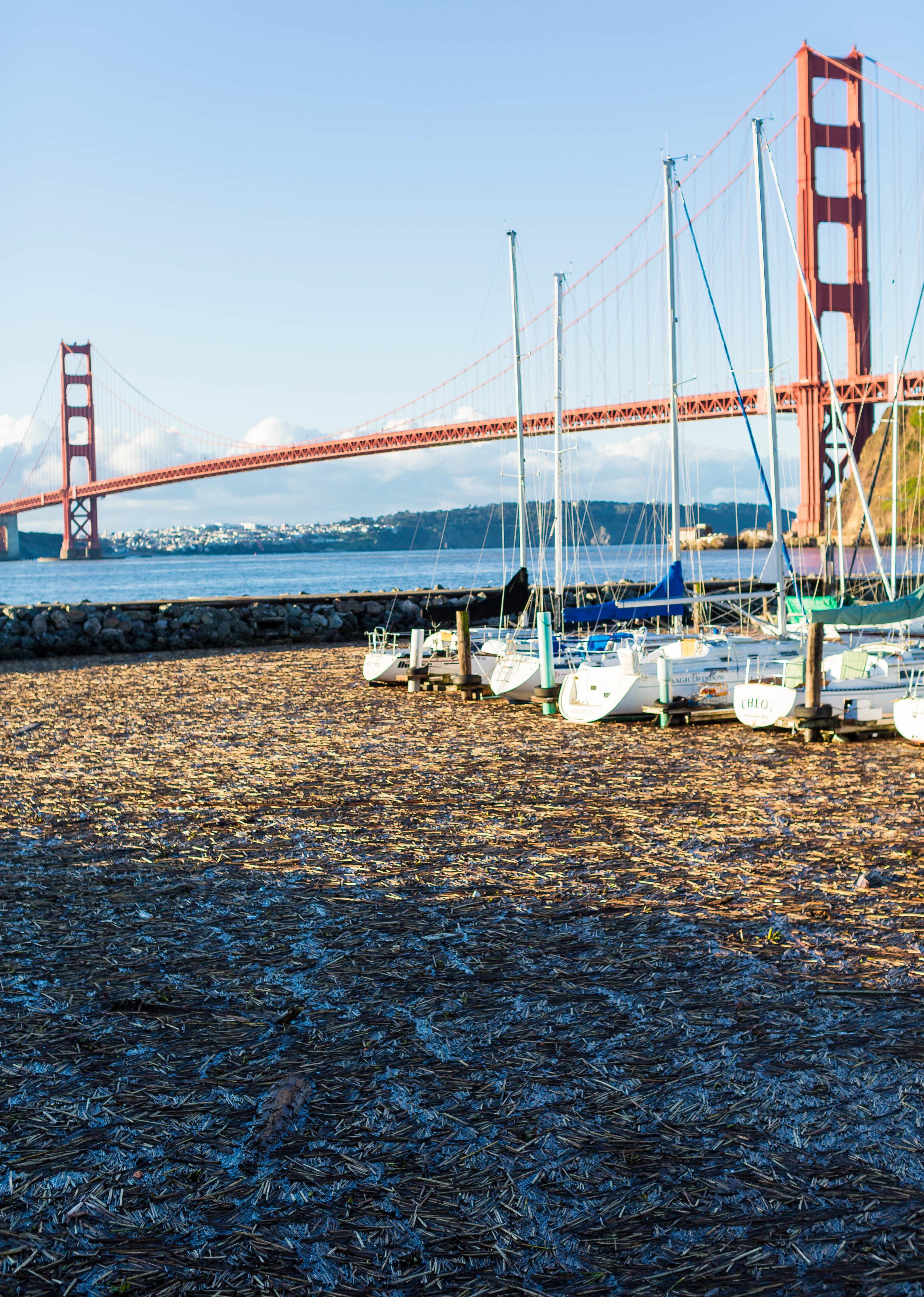 Debris fills Presidio Yacht Club Marina, just north of Golden Gate Bridge, Thursday morning.