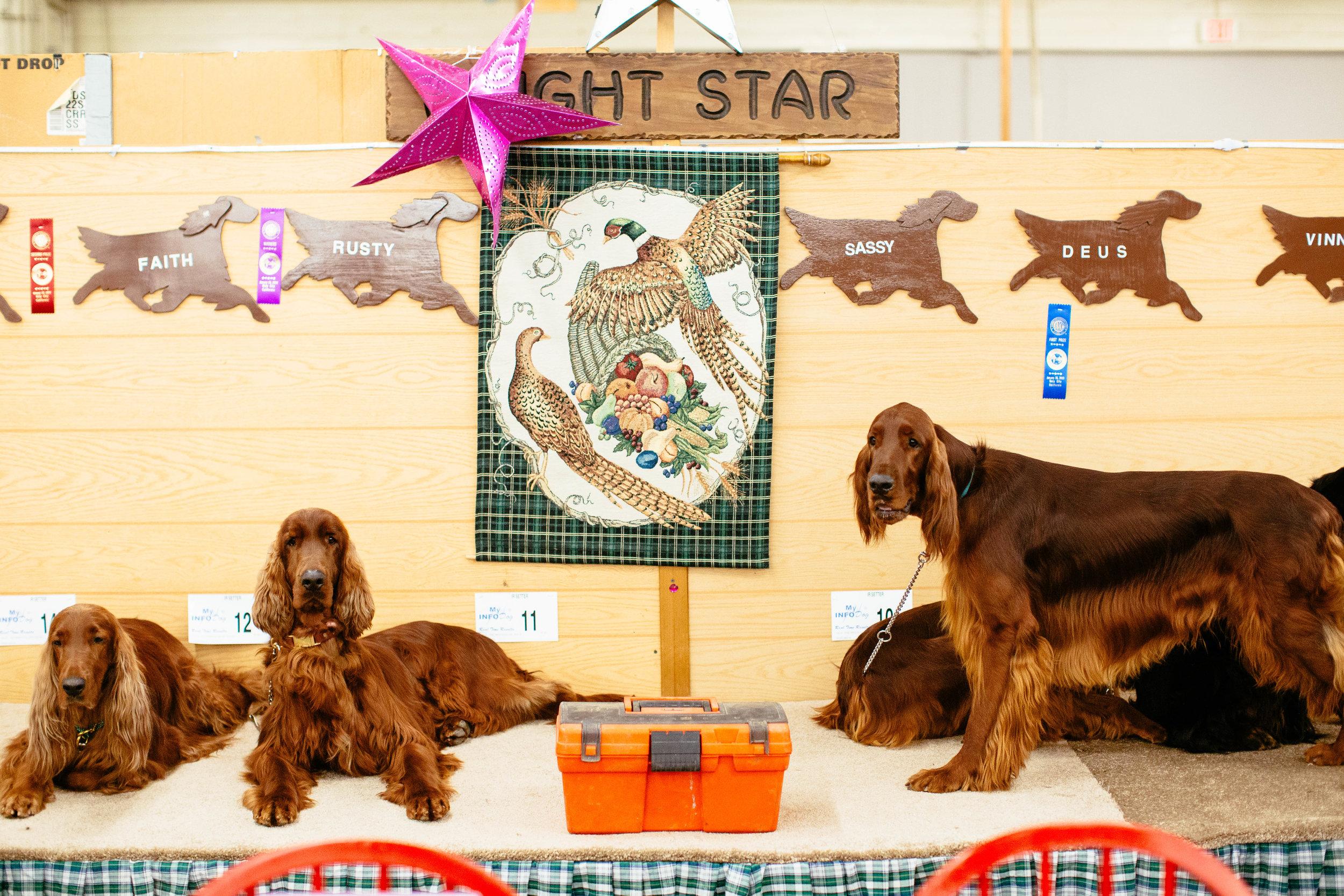 Dog Show SF-39.jpg