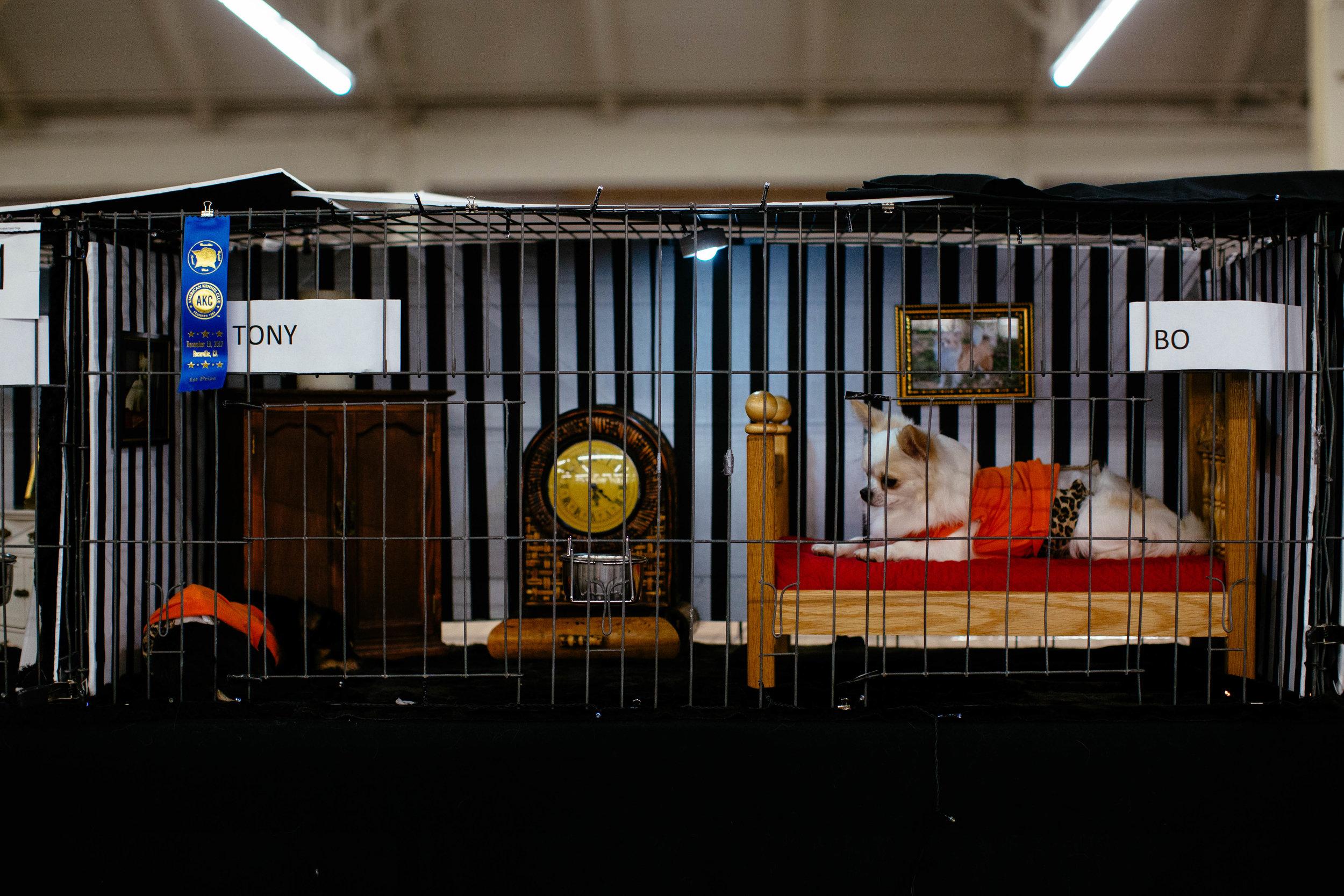 Dog Show SF-64.jpg