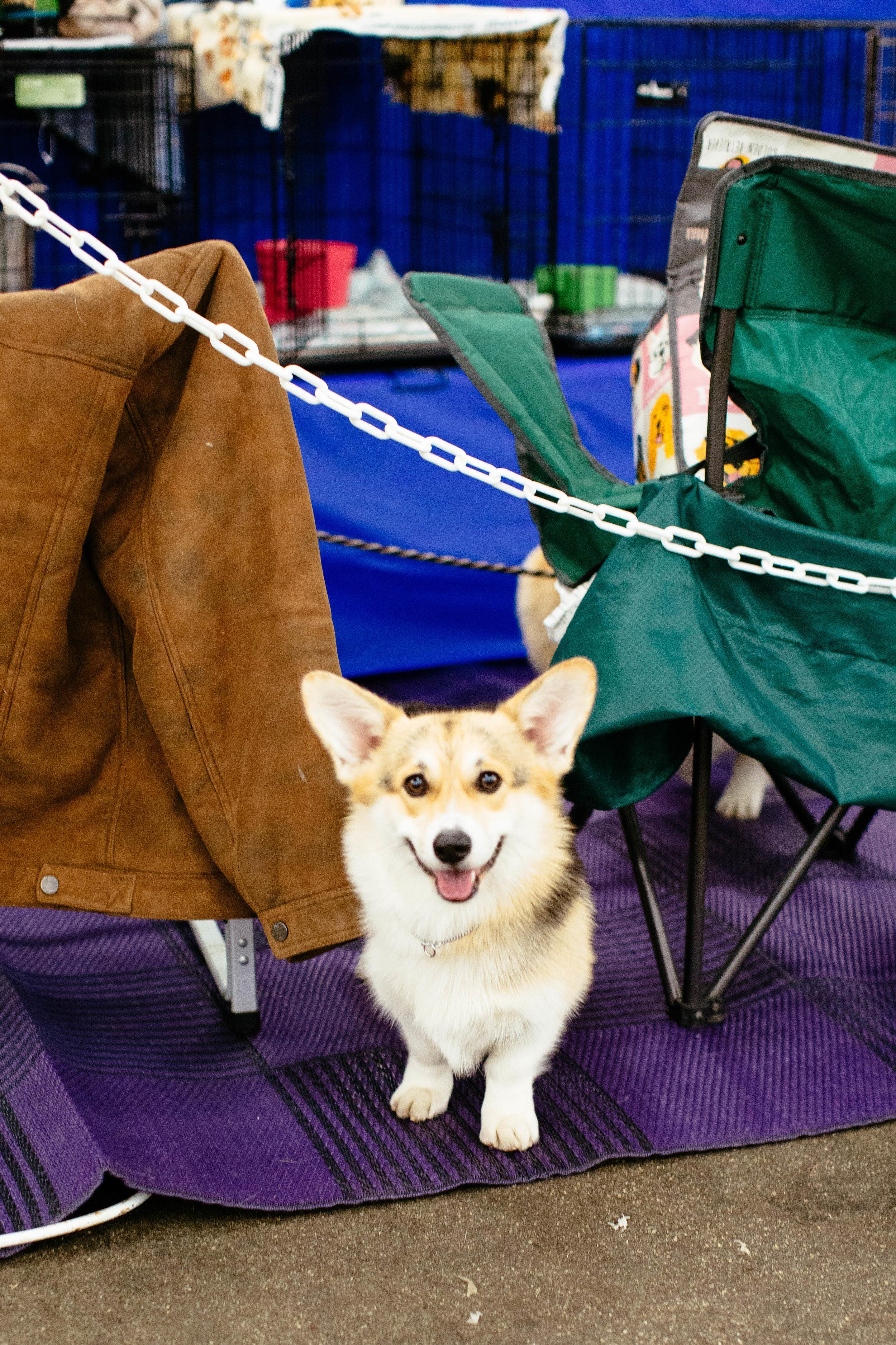 Dog Show SF-37.jpg
