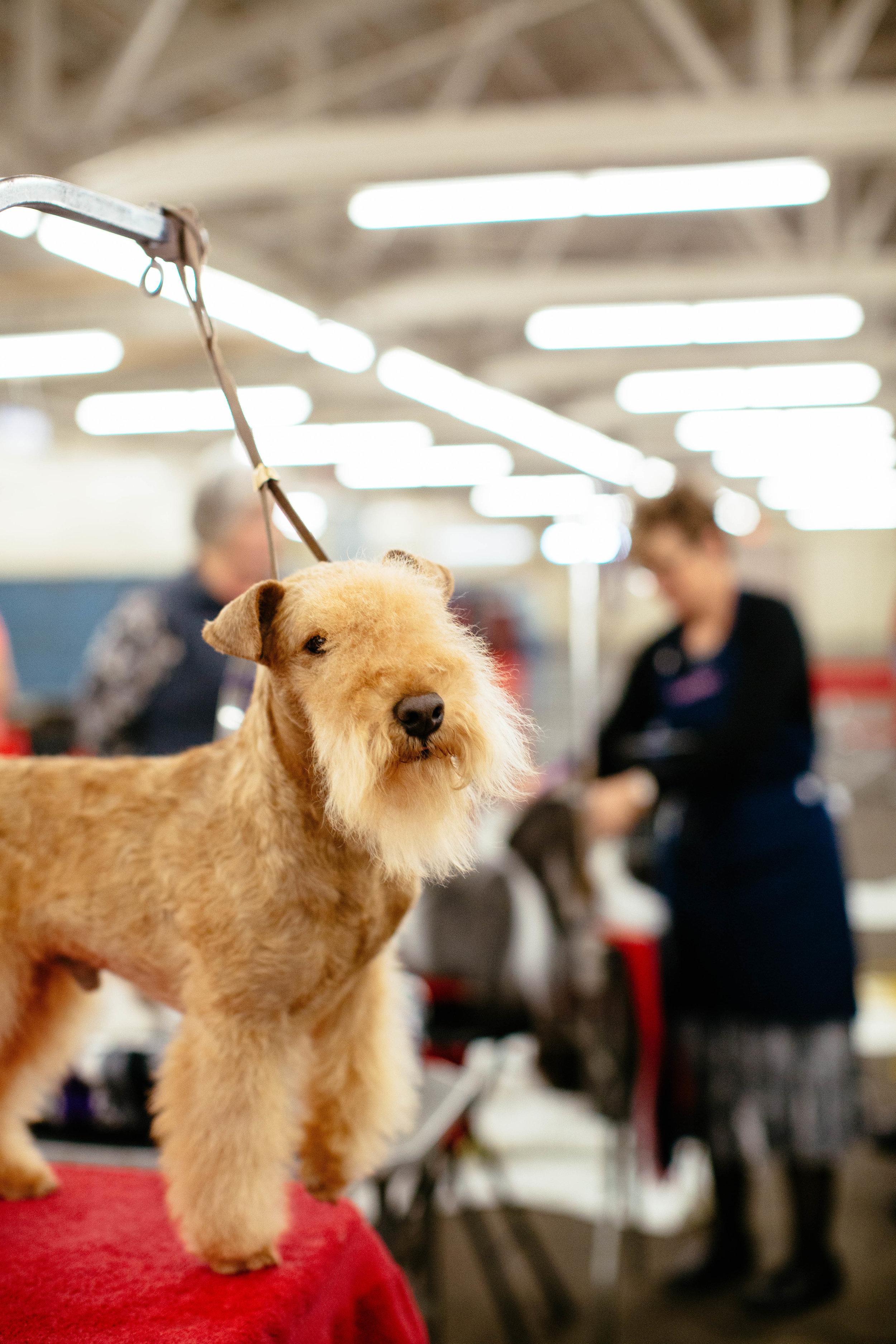 Dog Show SF-45.jpg